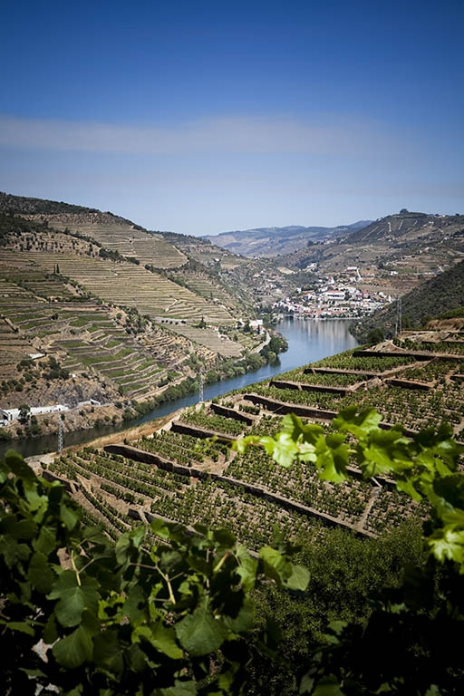 http://marisacardoso.com/files/gimgs/th-17_17_14douro.jpg